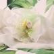 Piquet rose sur tulle - Boîtes à dragées - Dragées Braquier
