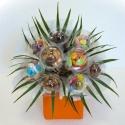 Bouquet N°17 Uni
